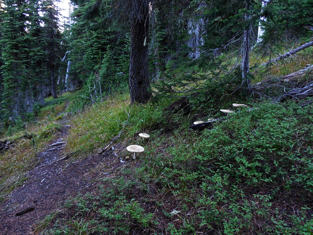 Mushrooms along the Mt. Headley Trail