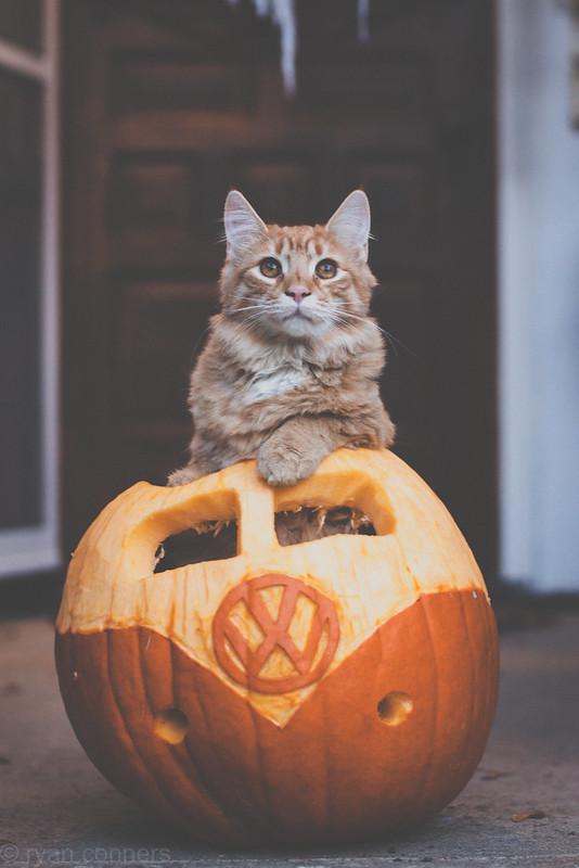 Rosie in a VW Pumpkin