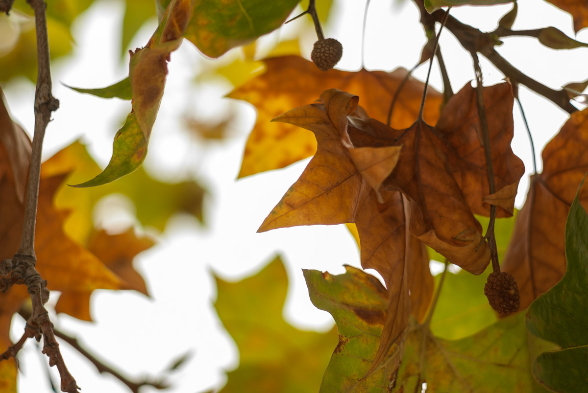 Hojas de otoño
