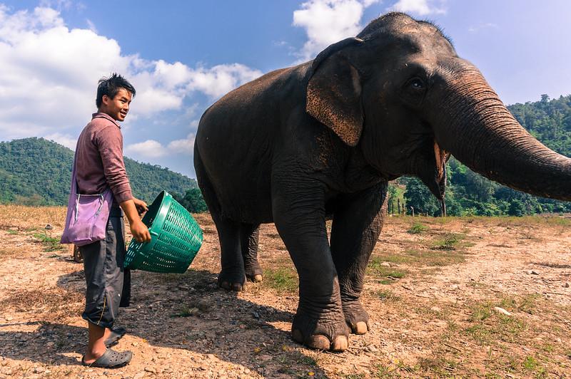 Elephant, Elephant Nature Park, Thailand
