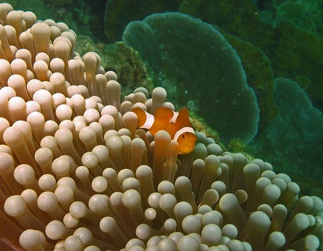 Buluan Island Marine Sanctuary