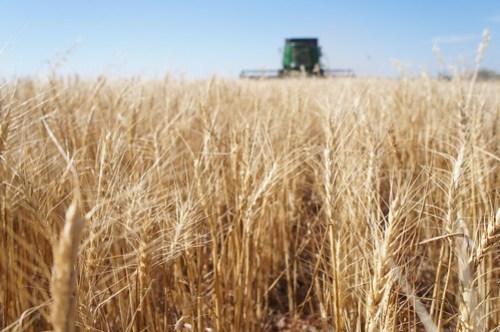 Emma: Oklahoma harvest