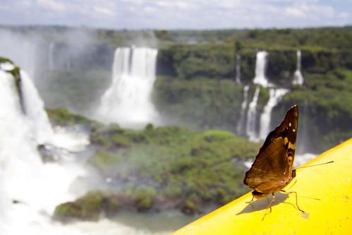 Mariposa frente a las Cataratas de Iguazú