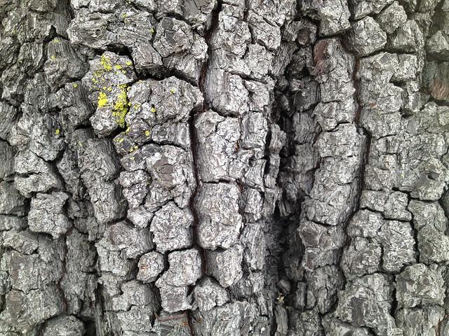 Tree trunk bark with lichen