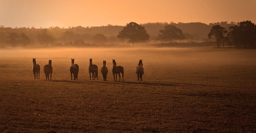 dawn horses