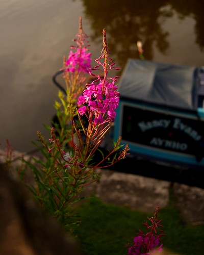 20130807-19_Canal Side Flowers - Bugsworth Basin near Buxworth by gary.hadden