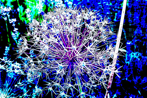 PAF-alliums03-w