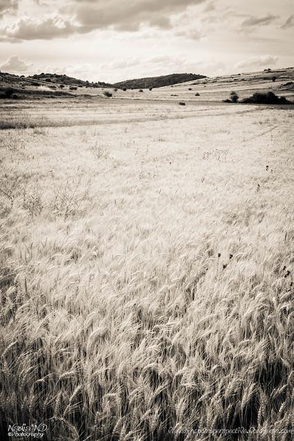 Pozondón entre campos #1