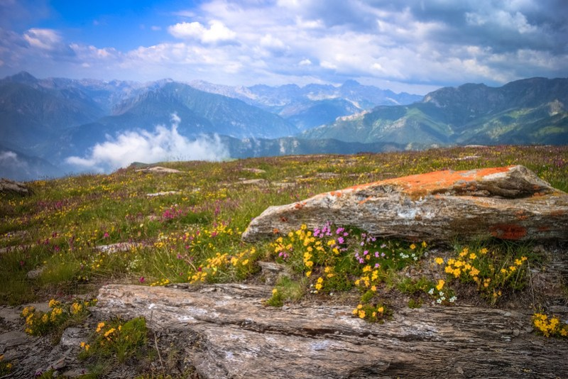 Alpine nature, in early summer :)