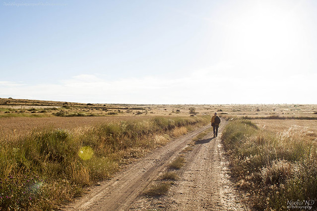 Pozondón entre campos #8