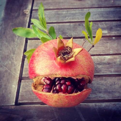 Cyclops pomegranate from Petaluma Pie Company