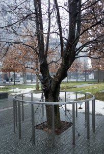 This tree was recovered weeks afterwards from the rubble