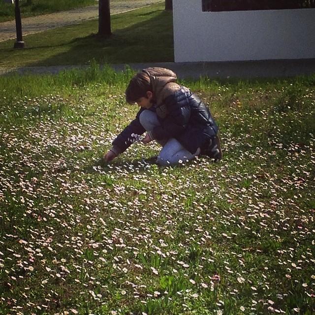 Primavera!! #spring #primavera