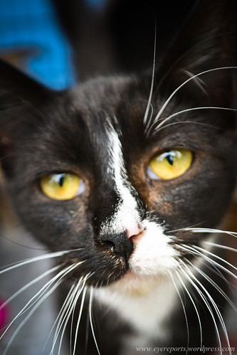 Cats for adoption by gomagoti