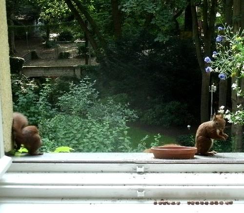Eichhörnchen 5.3