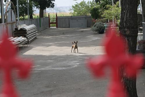 20131223 Yard guardian