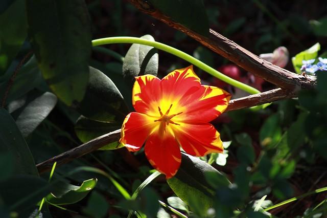 Blume_2