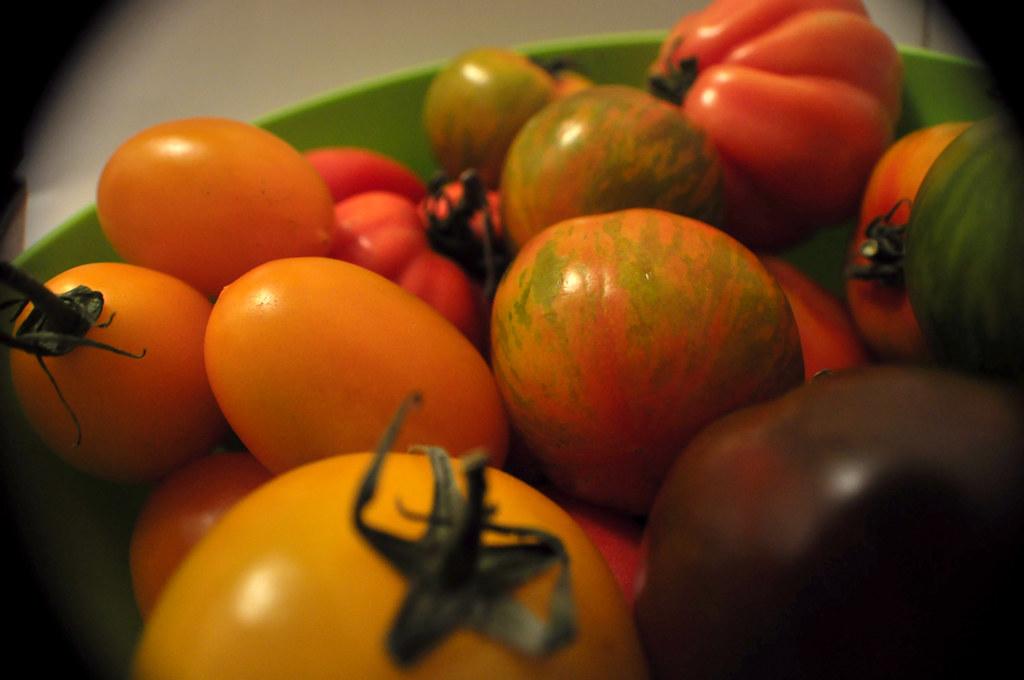 Tomates Multicolores_5