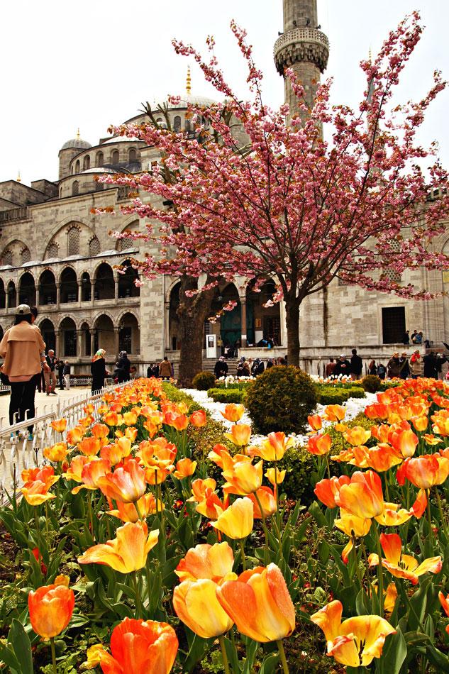 Istanbul Tulip Festival - Blue Mosque