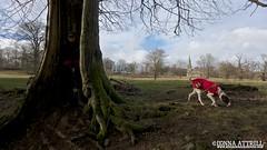 Walk around Studley Roger Deer Park. Sun 9th February 2014