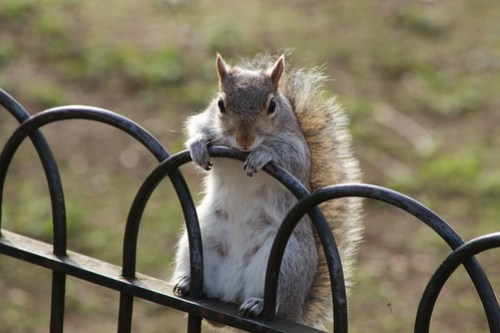 The Squirrel Who Was On The Fence
