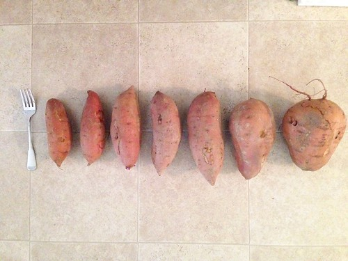 a spectrum of sweet potatoes