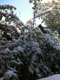 Home: First Snow