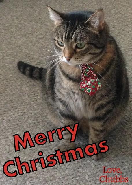 Christmas Chubbs
