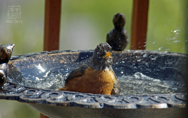 Robins Bath 12