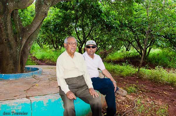 resting under the mango tree