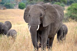 Elephant Factor