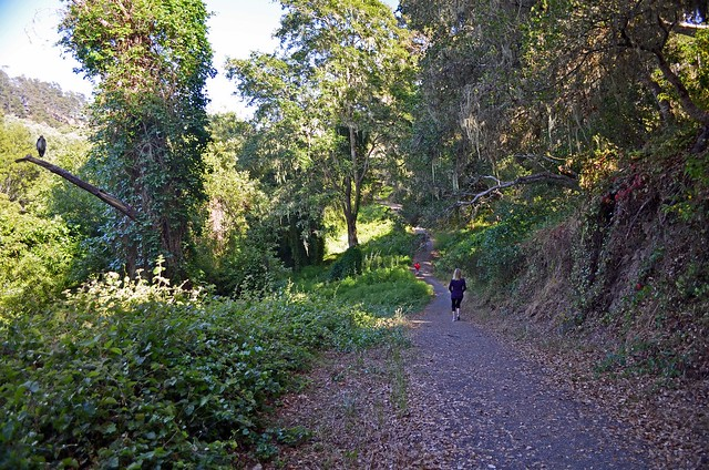 The trail climbs and descends while running through a lush riparian forest.