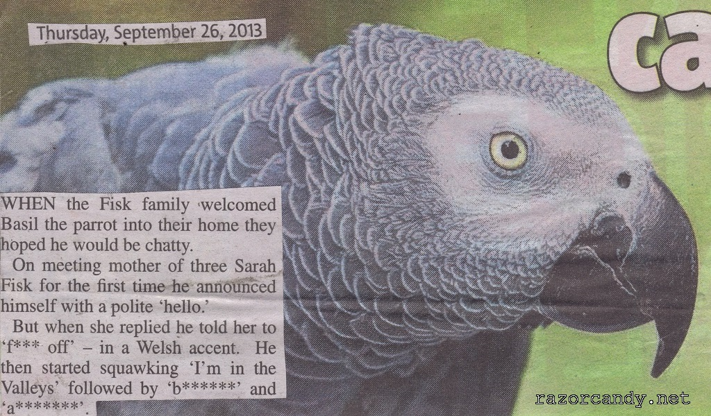 26-09-2013 Grey African Parrot Back