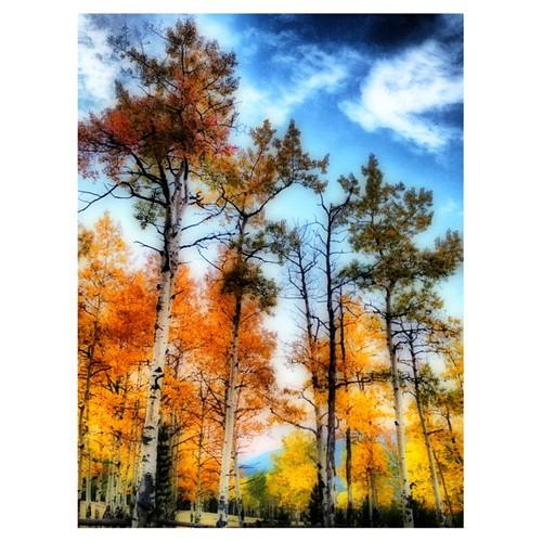 Colorado Aspens by @MySoDotCom