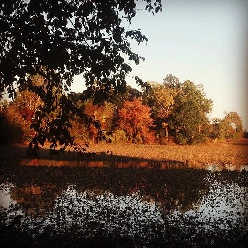 View While Nursing for October 20, 2013-  Wetlands at Veterans Park.  Woodbridge, VA  Http://viewswhilenursing.tumblr.com