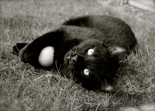 Cat and Ball by Nicki Ki