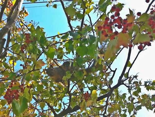 Squirrel! by fre1ga