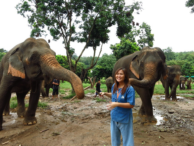 Chiangmai, Thailand: Baan Chang Elephant Park