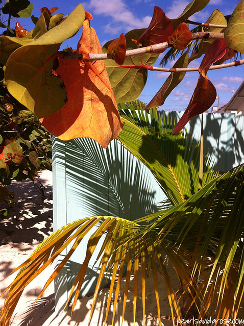 bahamas_palms_shadows_web