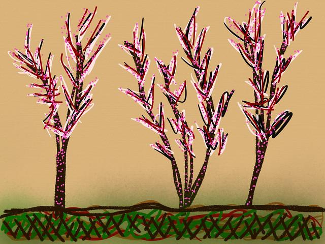 Sparkles Trees