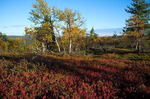 Fell Kaunispää, Saariselkä, Lapland