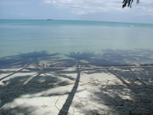2004_0147_palm_shadows