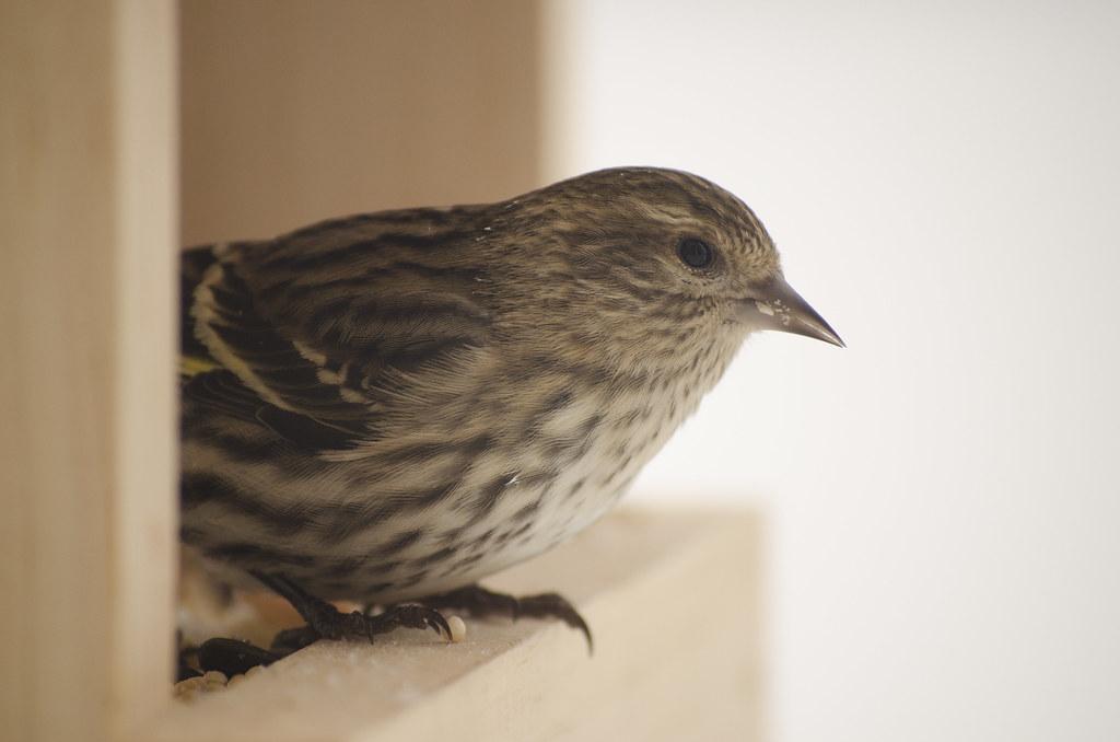 friend to the birds 3