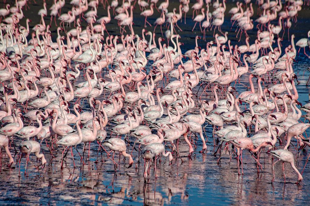 Flamingos in Walvis Bay.
