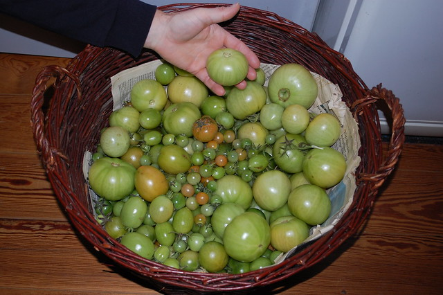 The last tomatoes