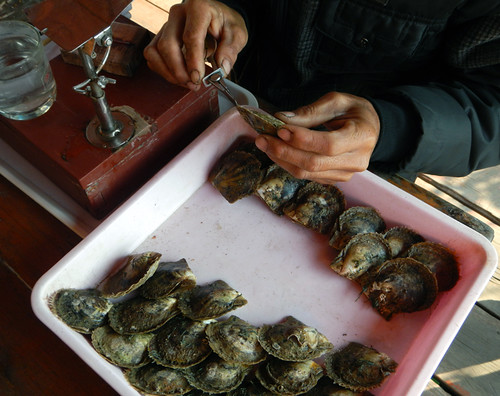 selecting an oyster in which to add a round coral bead (Halong Bay, Vietnam)