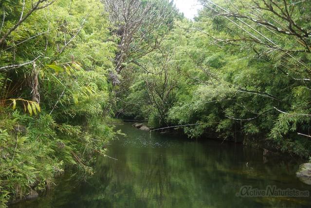 bamboo forest 0001 Na'ili'ili-haele, Maui, Hawaii, USA
