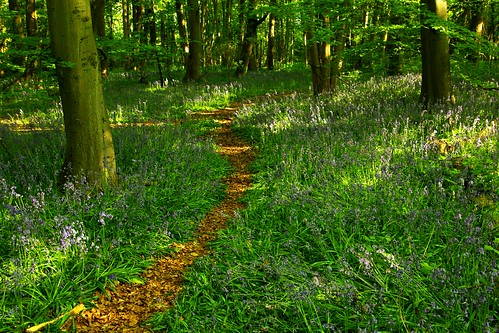 20130519-16_Cawston Bluebell Woods by gary.hadden