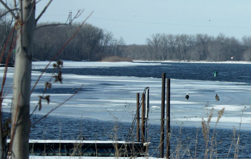a bald eagle and another bird sitting on an ice sheet in the middle of a river, with a dock and grasses in the foreground