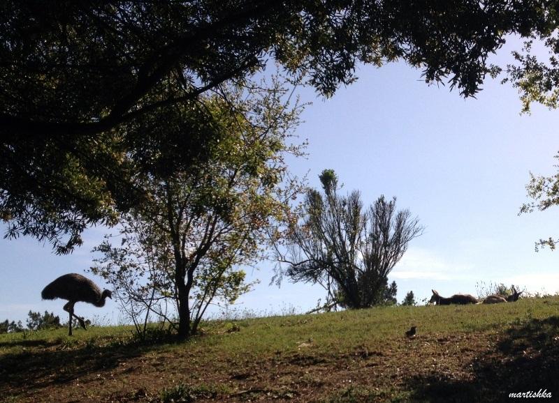 Oakland Zoo (46)